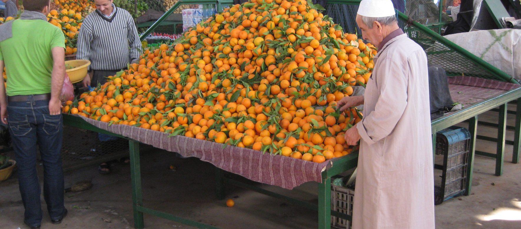 Maroc : La société Zalar Agri décroche un financement de 24 millions de $ pour développer ses exportations de fruits et légumes