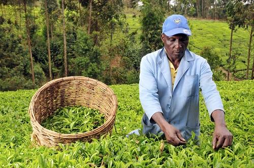 27 pays s'engagent pour soutenir l'agriculture africaine