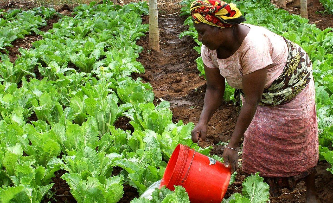 Israël accueille un Sommet agricole sur l'Afrique