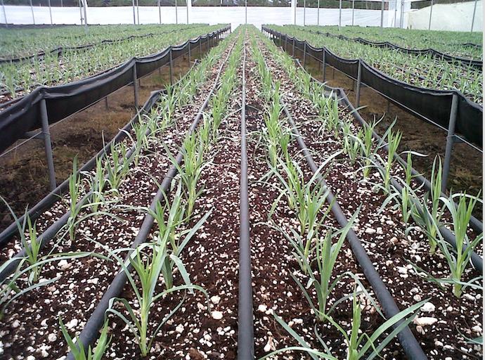Un important fonds israélien compte investir 50 millions d'euros dans l'agriculture