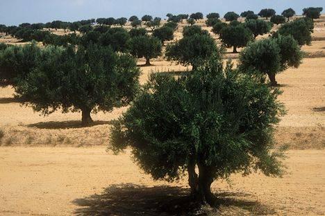 Le secteur agricole Tunisien table sur 10% de croissance en 2018