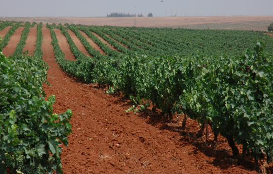 Algeria's trying to boost its agriculture 1