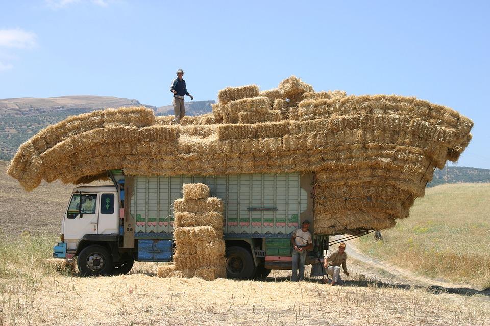 Dégradation sur le marché du travail marocain en 2016