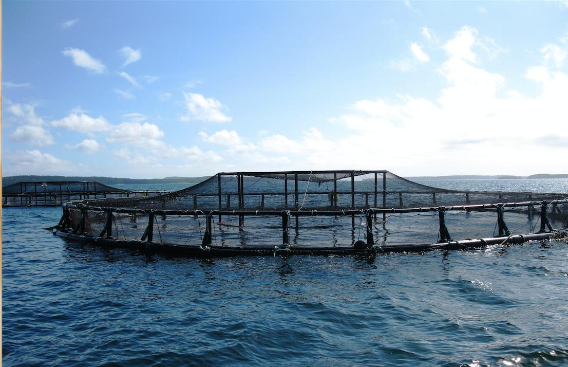 Des experts français au service du développement de l'aquaculture en Algérie