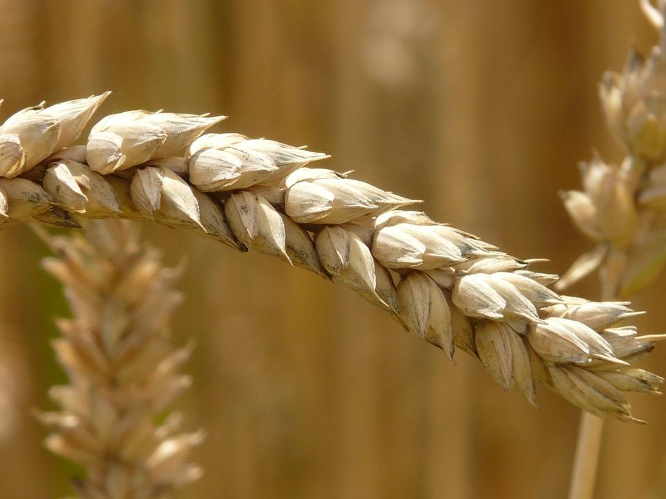 Tunisie : Le secteur agricole sauve l'économie tunisienne.