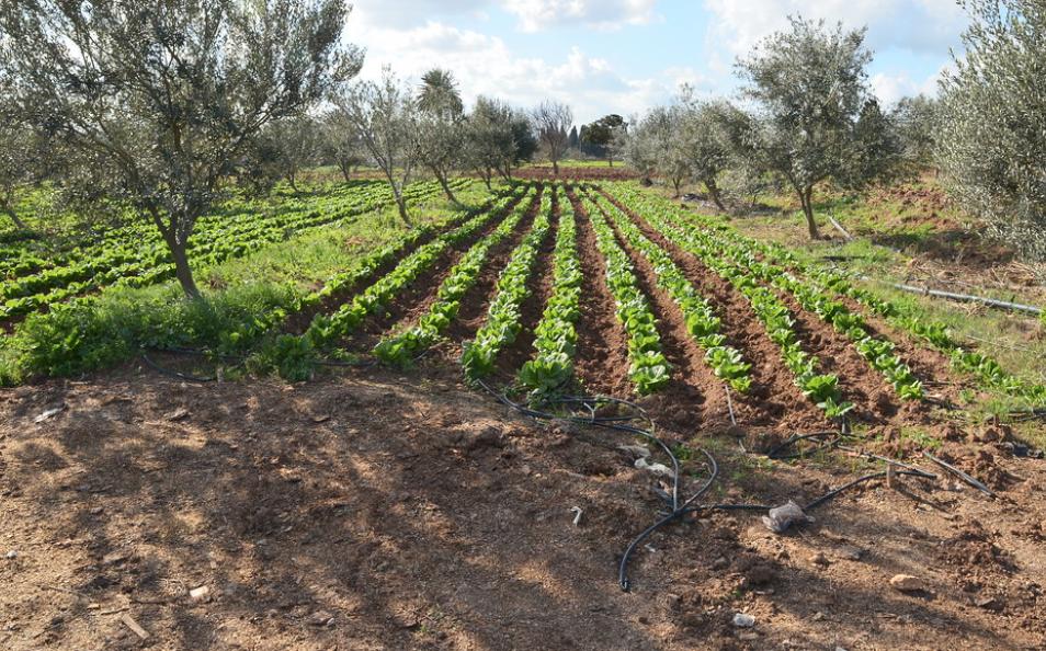 La Tunisie veut soutenir son secteur agricole en tant que priorité dans le cadre de son plan de relance économique