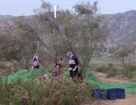 Maroc : 99% des femmes n'ont pas accès à la propriété agricole