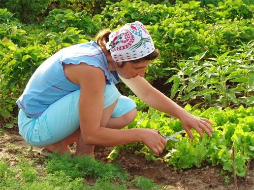 Palestine : diminution de la production agricole
