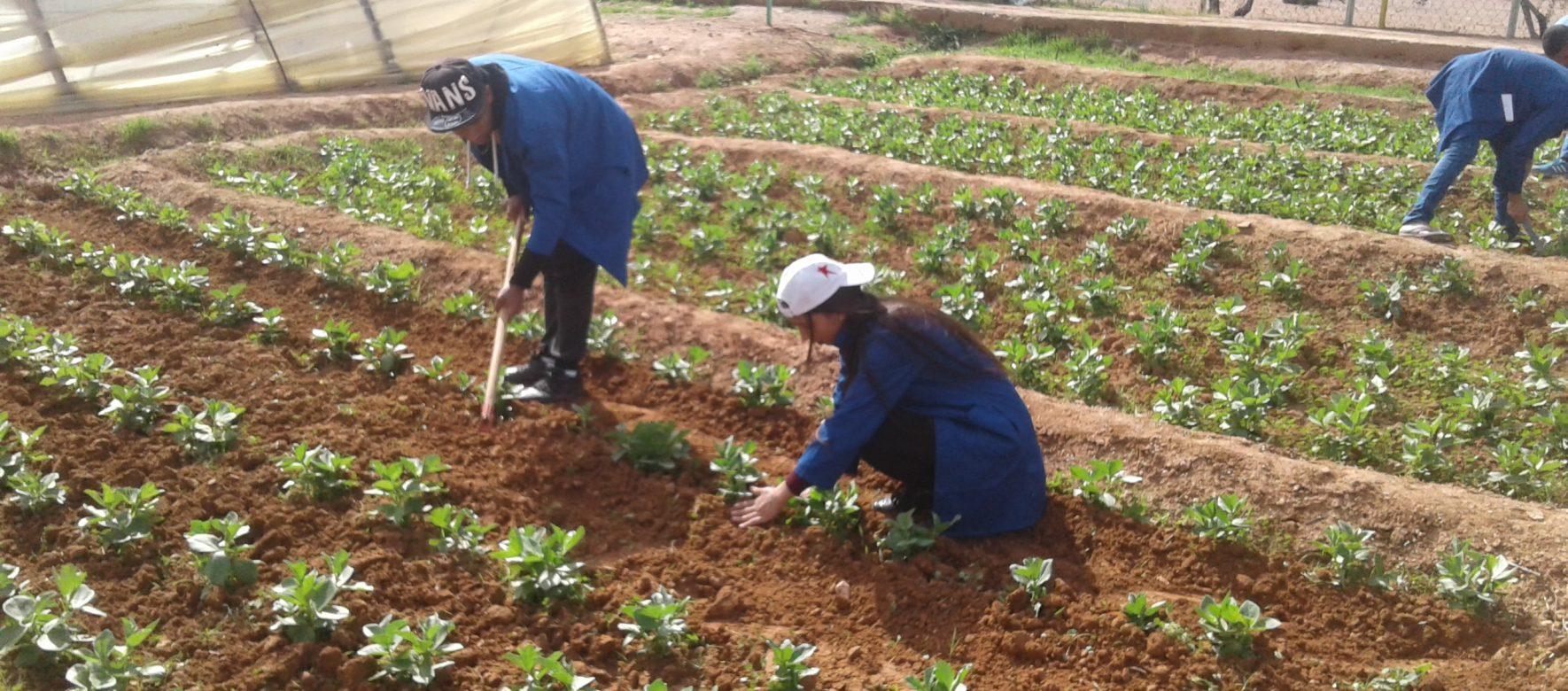 Maroc : L'agriculture attire les investissements étrangers comme Development Partners International