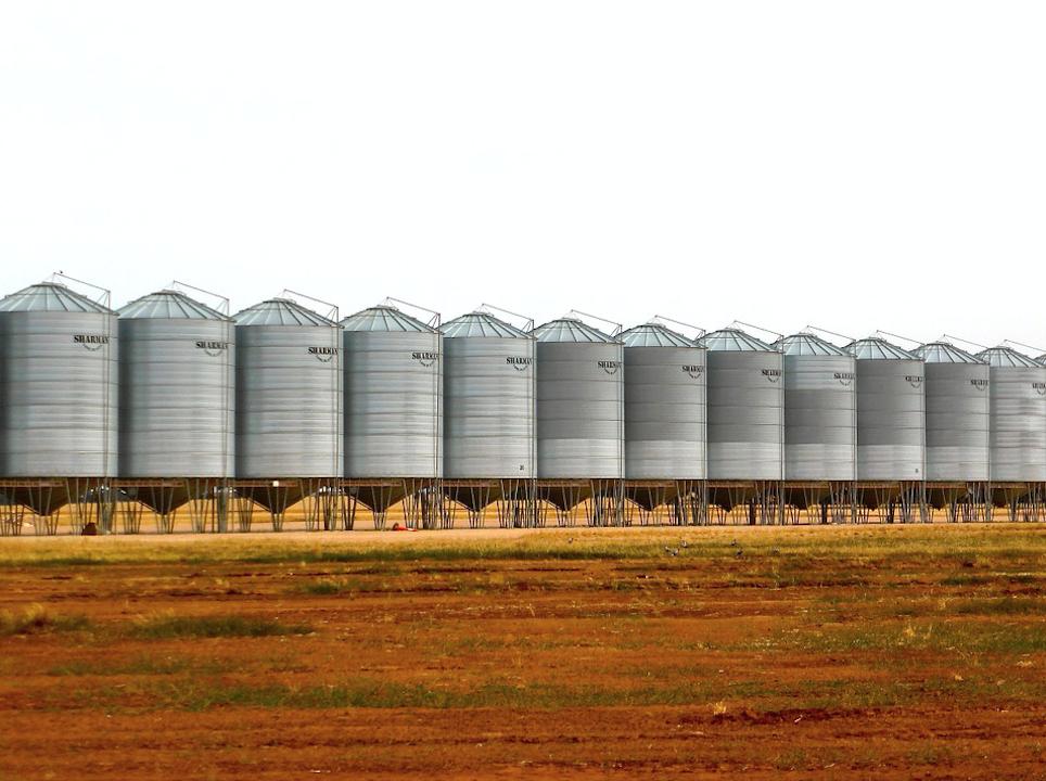 L'Egypte souhaite diminuer son importation de blé avec l'aide de Blumberg