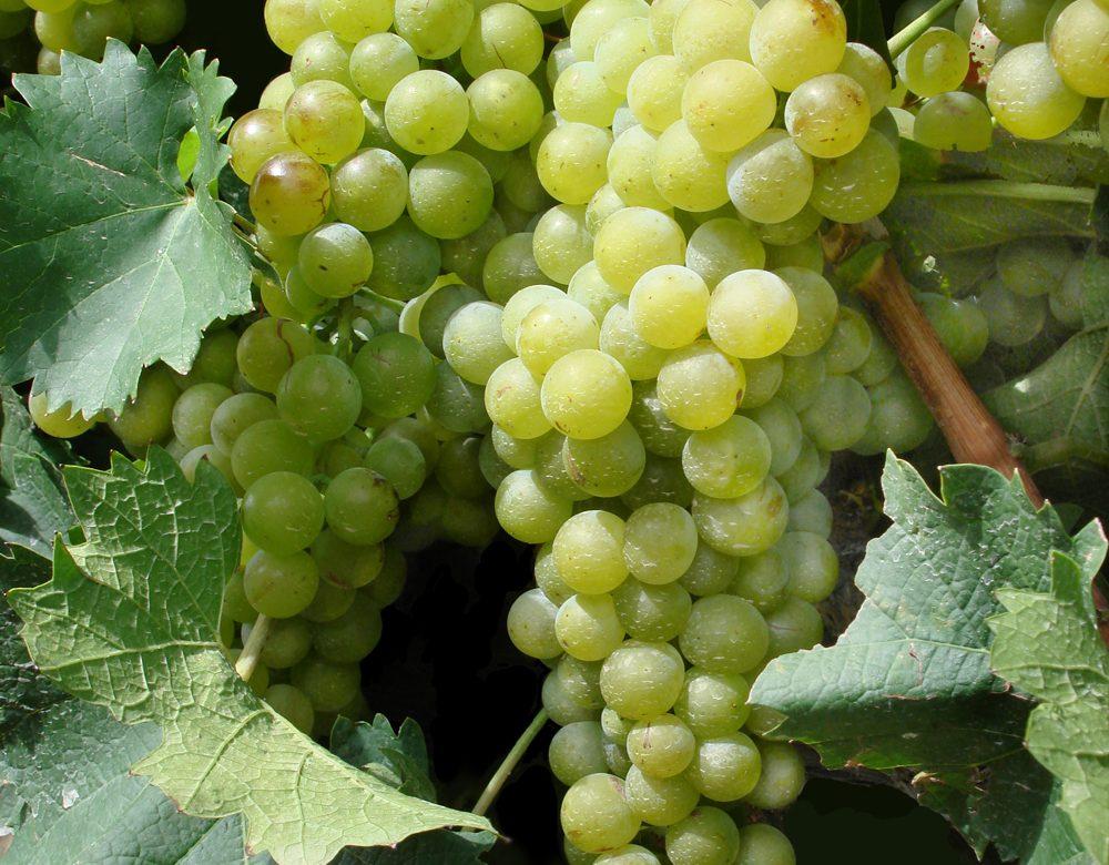 Le Liban, nouvelle terre promise du vin ?