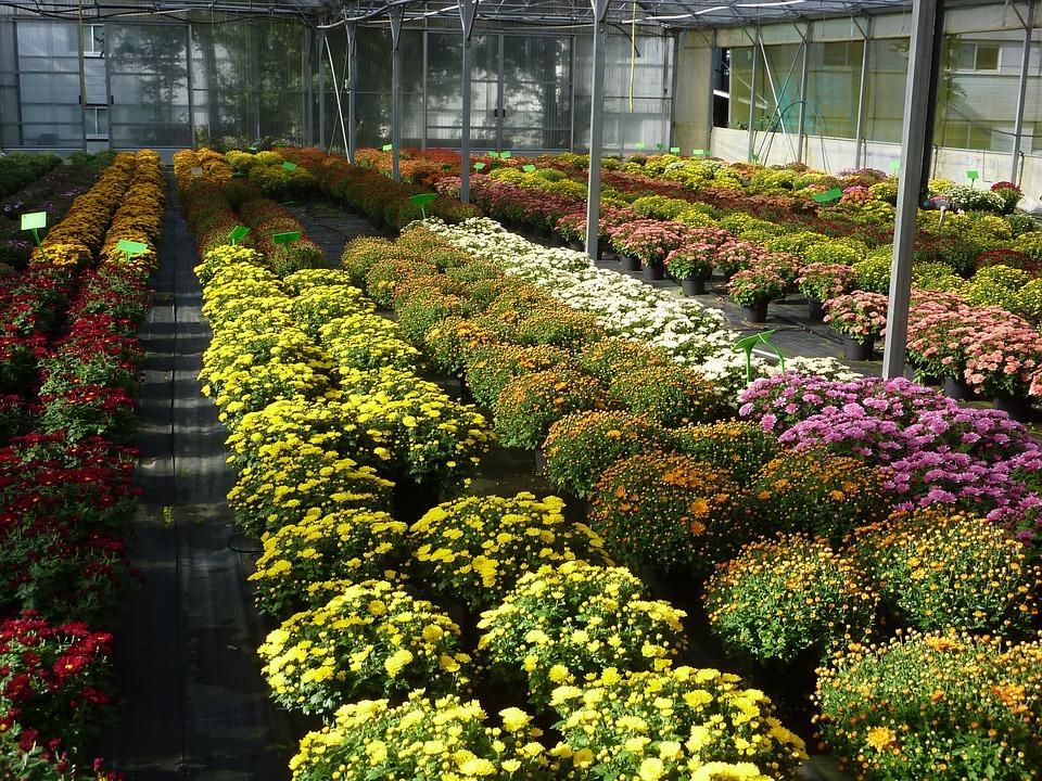 Israël va soutenir les initiatives agricoles du Rwanda