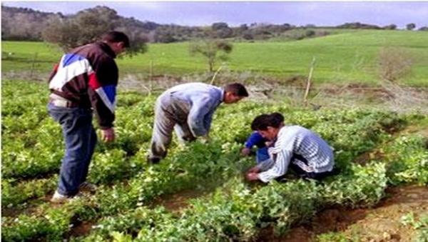 Algérie : Rapprocher les jeunes de l'agriculture