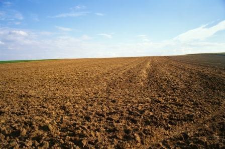 La Tunisie repense la gestion de ses terres domaniales agricoles