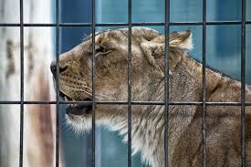 Une loi en faveur de la protection animale votée au Liban !
