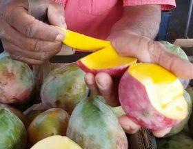 Les mangues d'Egypte débarquent sur les marchés de la Réunion et provoquent un tollé chez les producteurs péi