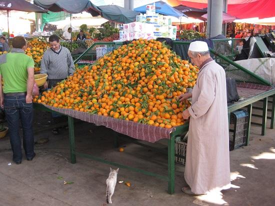 L'embargo américain sur les agrumes marocains est levé