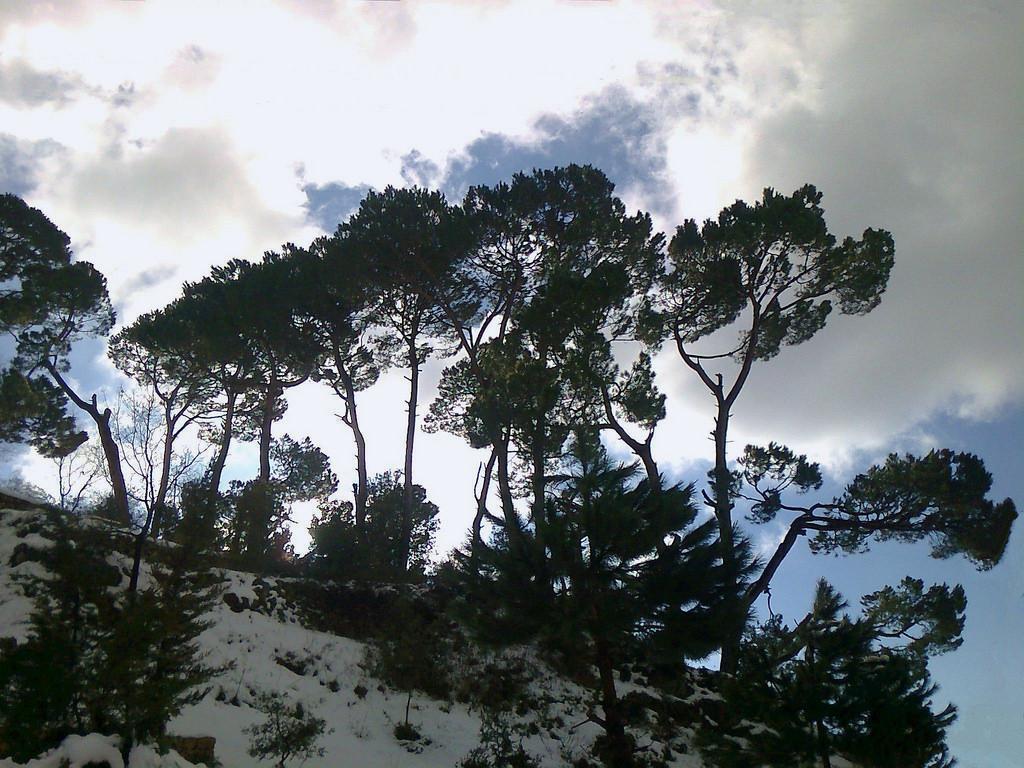 Le Liban lance un programme de reboisement de ses forêts