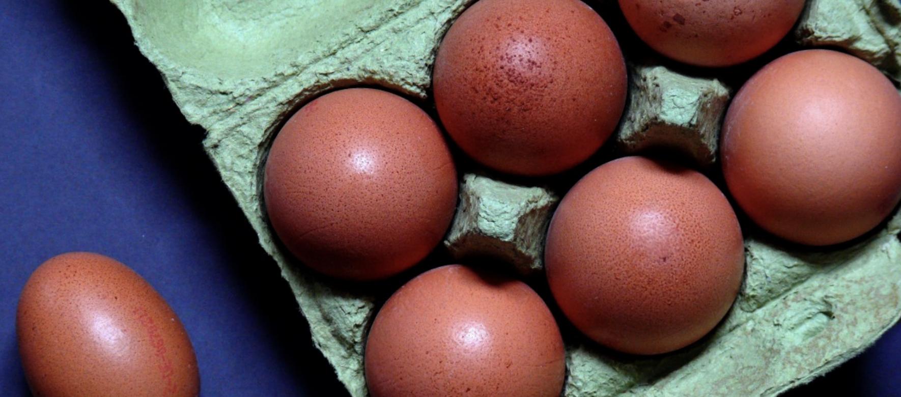 Maroc : La filière de production d'œufs de consommation traverse une période difficile en raison du coronavirus