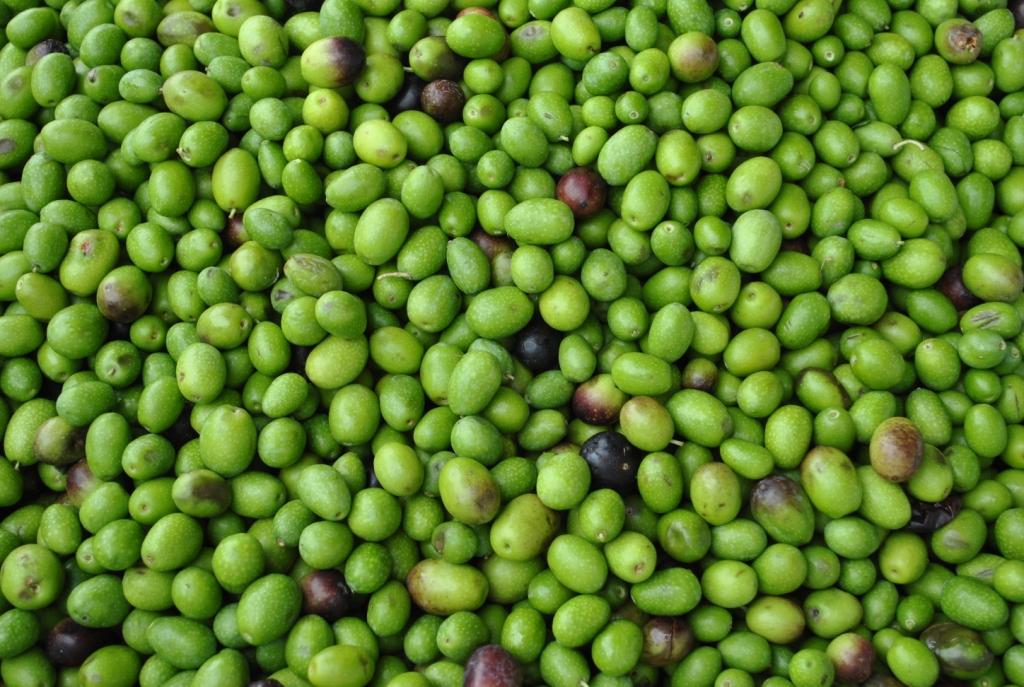 La Tunisie devient le premier exportateur mondial d'huile d'olive