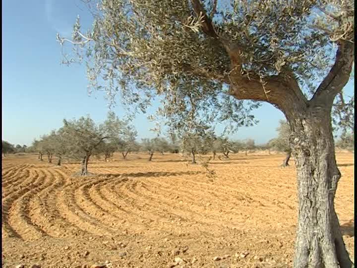 Méditerranée : Le CIHEAM-IAMM au coeur d'une initiative en faveur des zones arides