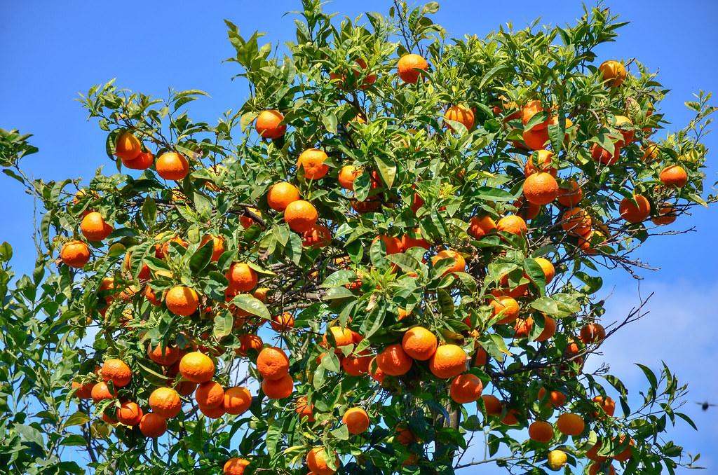 Le Maroc veut développer la région du sud à Dakhla avec la construction d'une unité de conditionnement de fruits et légumes