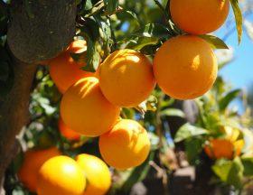 11 000 hectares de terres cultivables vont être distribuées en Tunisie