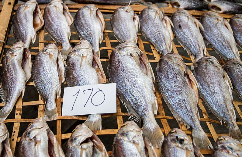 Égypte : Coup de projecteur sur Ahmed Abdel Salam, un jeune entrepreneur innovant spécialisé en aliments de poissons