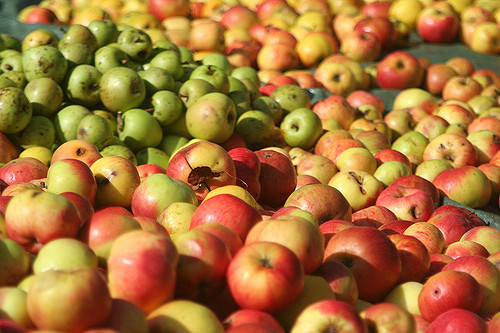 Les raisons de la colère des producteurs de pommes au Liban