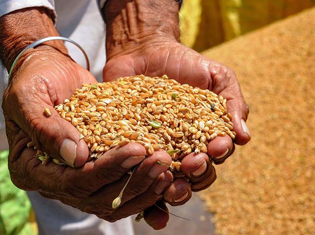 Afrique du Nord : Quel est l'impact du Covid-19 sur le marché des céréales en Méditerranée ?