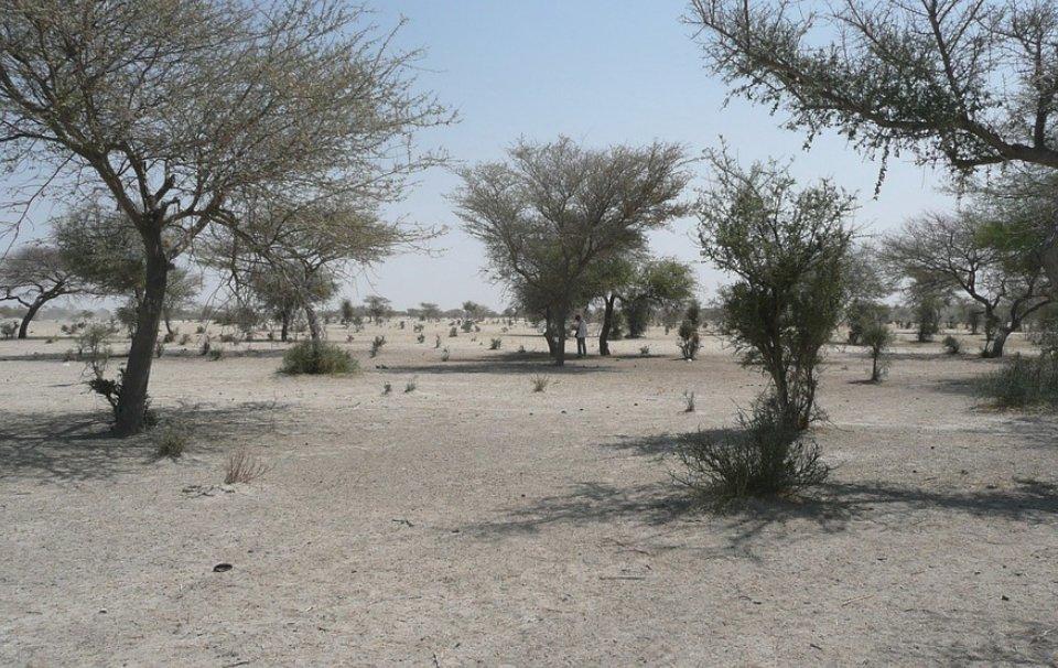 Israël veut apporter son savoir-faire technologique au Cameroun pour améliorer la qualité de son approvisionnement en eaudans les régions du Sahel