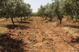 L'Etat Tunisien assainit la gestion de son foncier