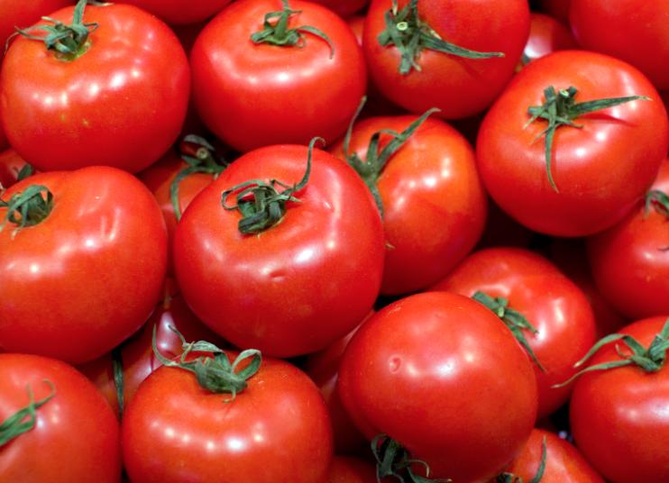 Egypte : La compagnie Nouna Juices and Concentrates va construire une usine de production de concentré de tomates en Haute-Egypte
