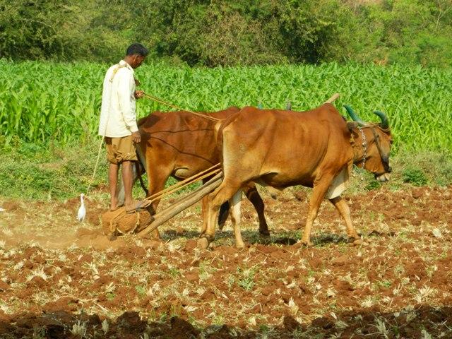 L'Algérie va partager son expérience agricole avec la Palestine