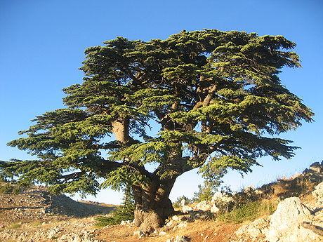 L'assurance vie au Liban en bonne santé