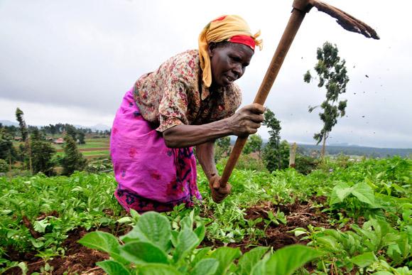 L'Egypte veut être un modèle pour l'agriculture en Afrique
