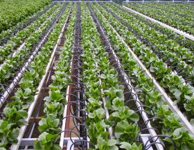 Israel: Irrigation firm Netafim wins $ 85 million contract in India