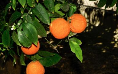Le Maroc devrait voir ses exportations agroalimentaires augmentées de 10%