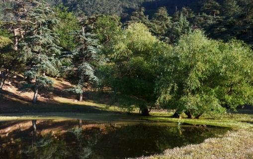 Algérie : Plantation de près de 2,3 millions d'arbres résistants à la sécheresse à l'horizon 2023