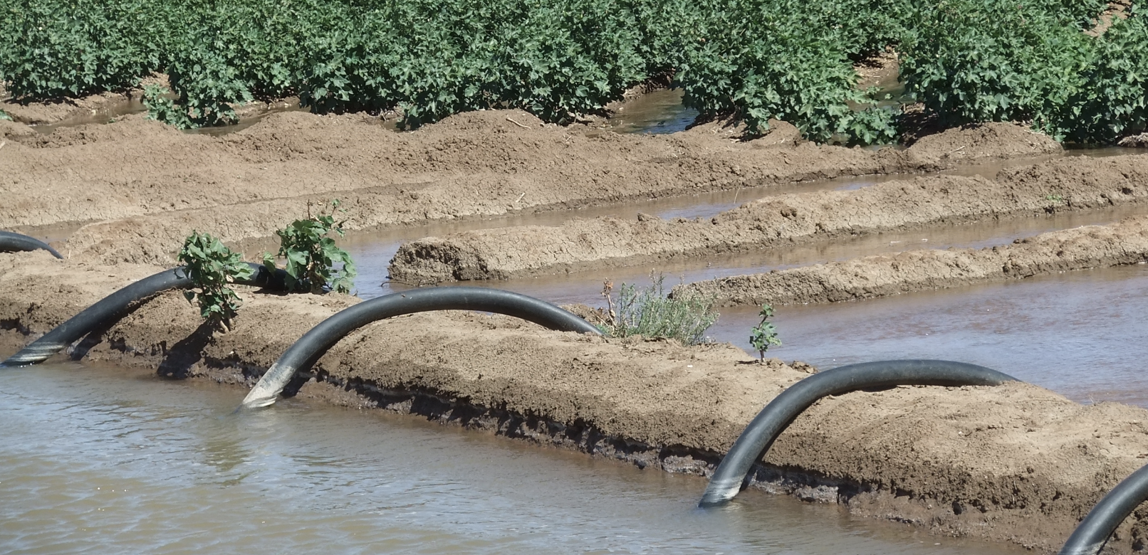 L'Egypte veut faciliter l'accès des fermiers aux systèmes solaires d'irrigation