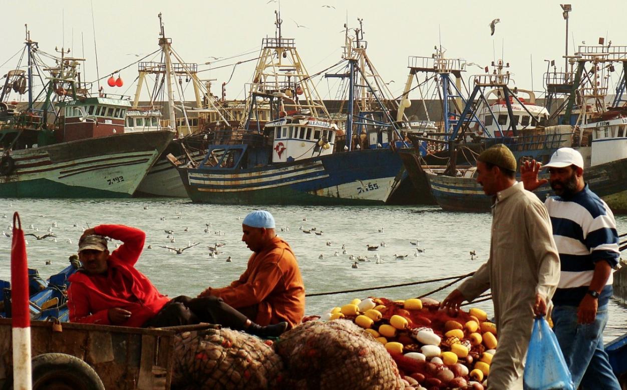 Maroc : La filière pêche affiche une bonne performance depuis le début de l'année