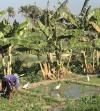Tunisie : Le gouvernement va débloquer 120 millions $ pour son secteur agricole en 2021