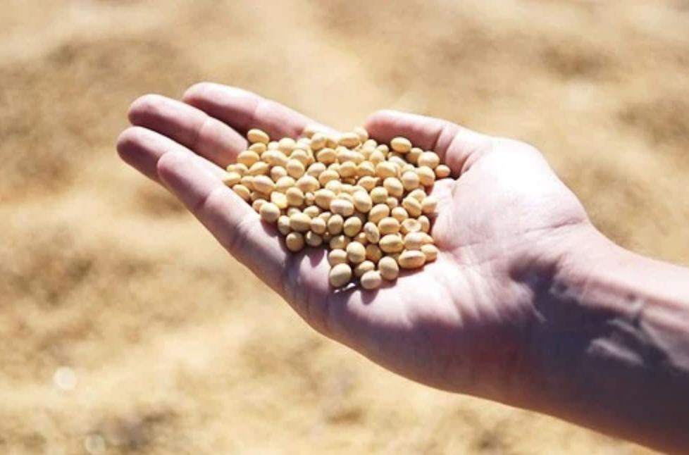 L'Algérie pourrait devenir un des principaux hubs de la trituration de soja sur le continent africain