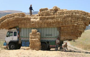 Maroc : La nouvelle feuille de route pour le secteur agricole dénommée « Génération Green » va bénéficier de 250 millions $ de la part de la Banque mondiale
