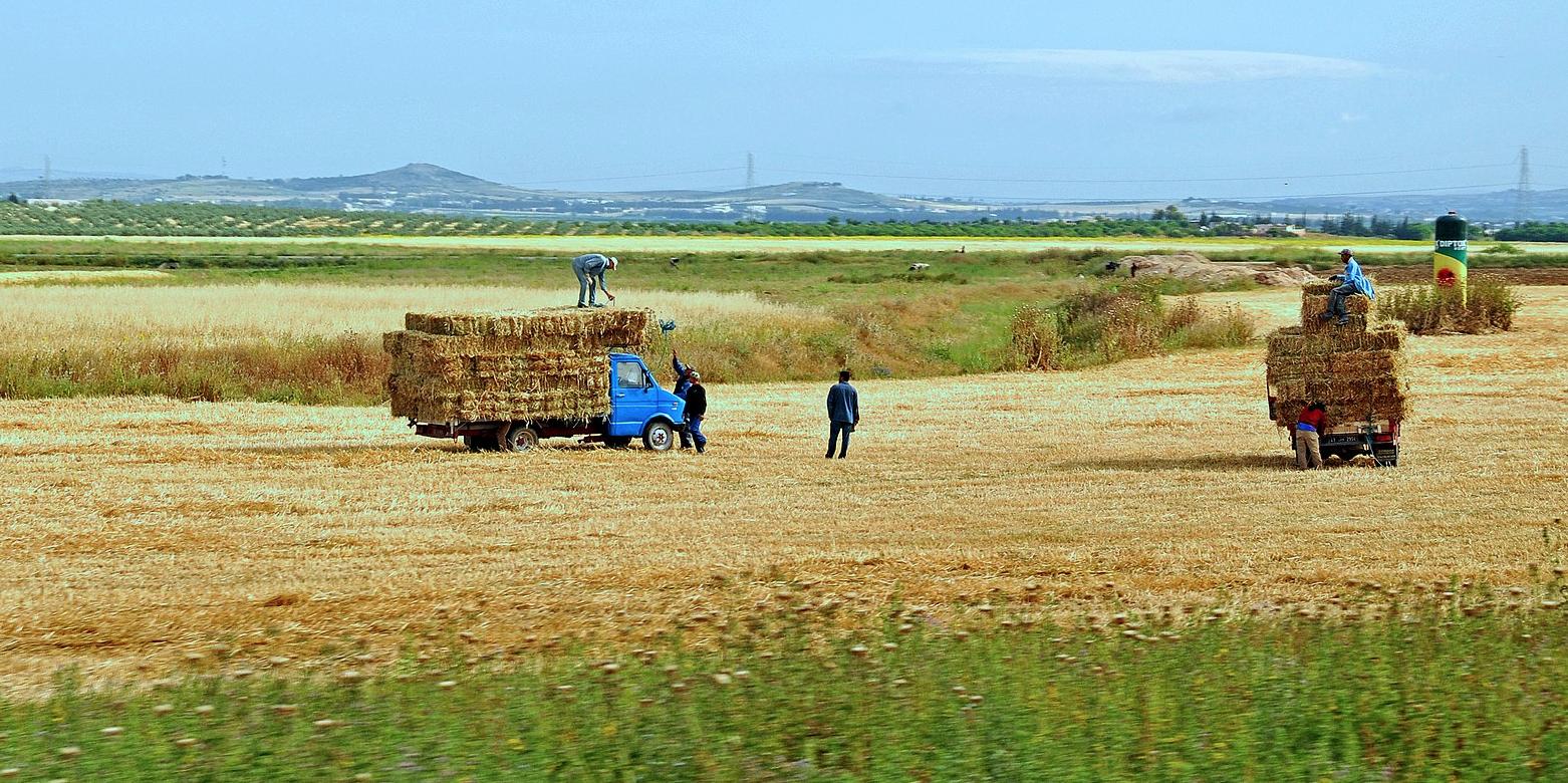 Tunisie : Les exportations agricoles et agroalimentaires constituent 10 % des exportations totales de marchandises du pays