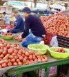Maroc : La filière tomate marocaine continue de rayonner au Royaume-Uni