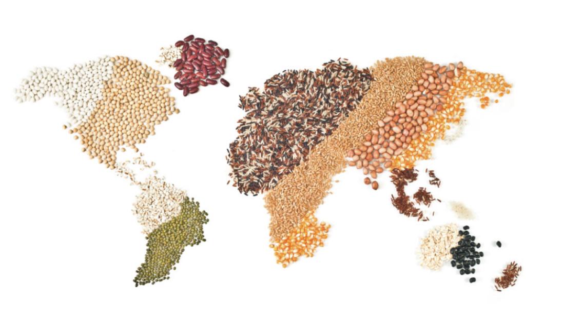 Méditerranée : Le Conseil International des Céréales et MED-Amin organisent un webinaire d'information et de dialogue sur les