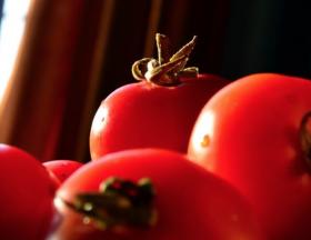 Morocco: The Moroccan tomato production continues to shine in the United Kingdom