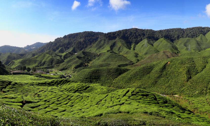 UAE becomes Kenya's largest tea importer ahead of UK and Egypt