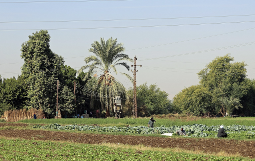 Egypt wants to take advantage of trade opportunities linked to strong Chinese demand for agricultural products